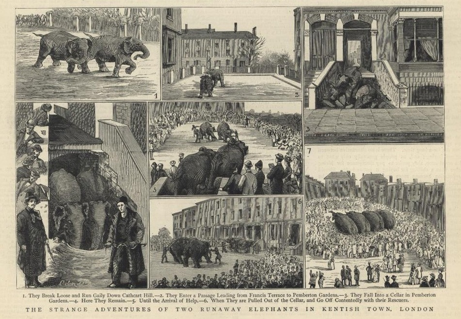 The Graphic, 1884, Elephants