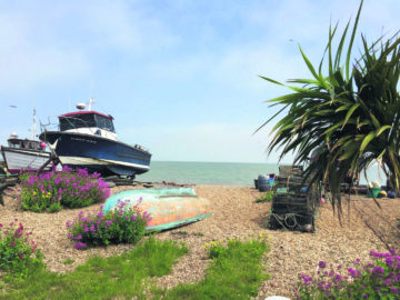 Colourful valerian is everywhere on the beach in the summer, especially on the promenade up past Walmer to Kingsdown. Photo: SE